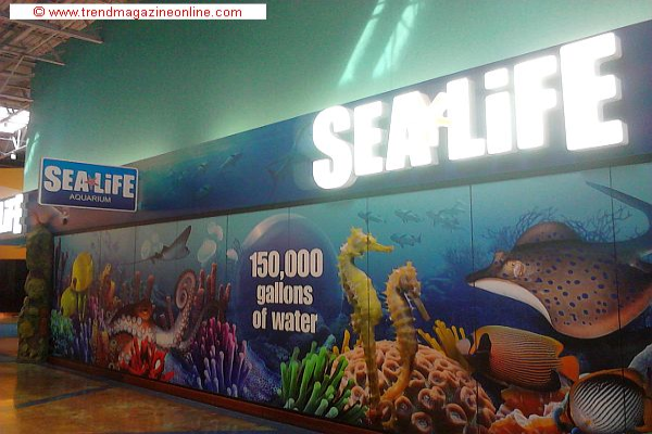 Sea Life Aquarium Concord NC Travel Review - Trend Magazine Online